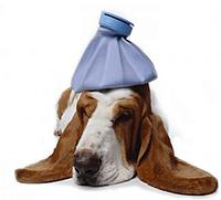 Honden ziekten zieke hond