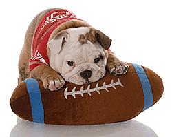Hondensport, sporten met je hond