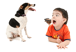 Opvoeding en gedrag honden en kinderen