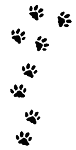 Afdrukken van honden poten